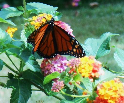 October 7, 2014 garden 011