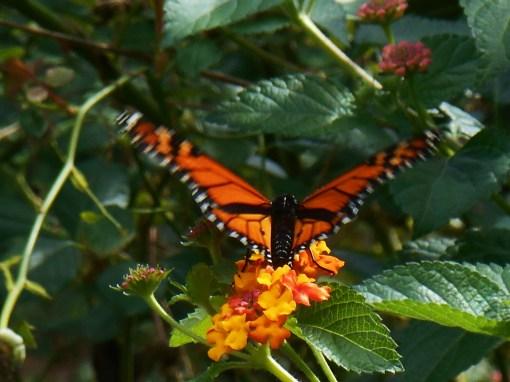 October 7, 2014 garden 015