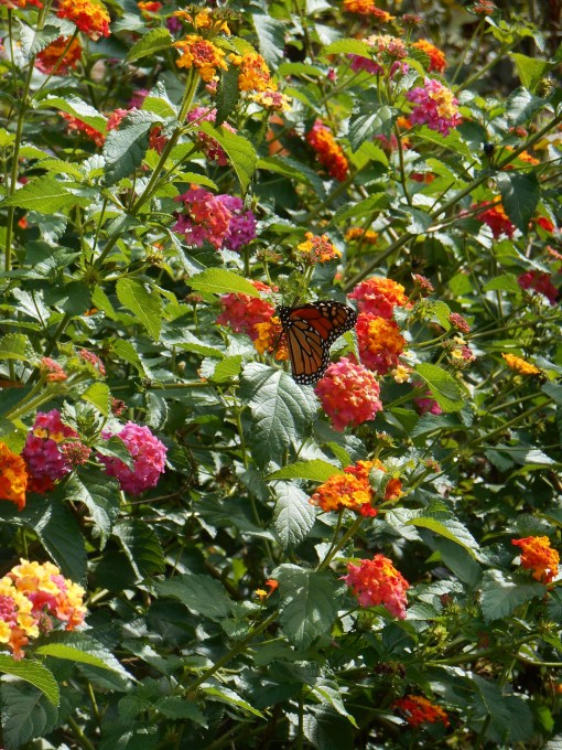 October 7, 2014 garden 019