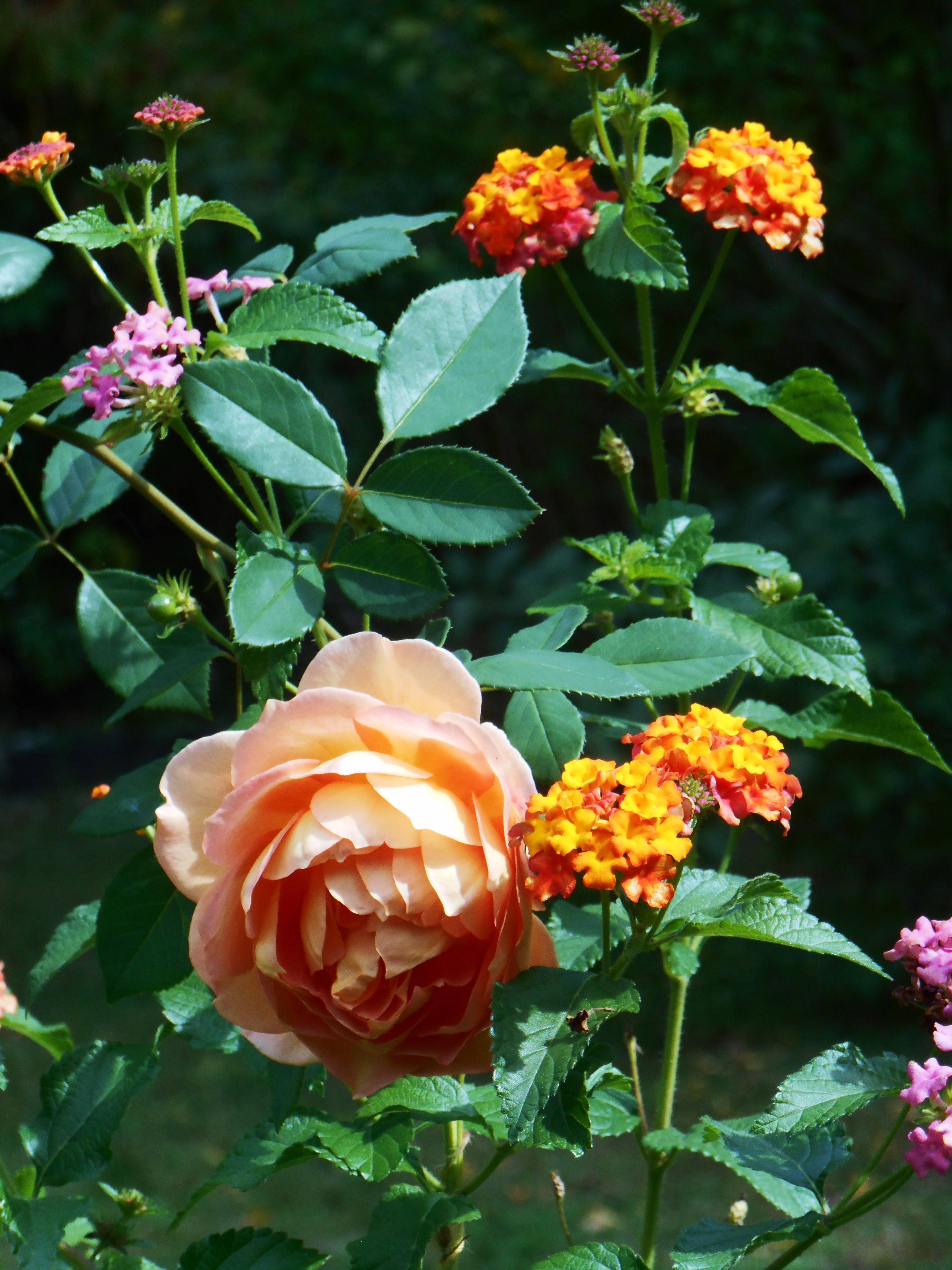 Many Of Us Plant Exotic Plants And Purely Ornamental Plants, Like These  Roses, Instead