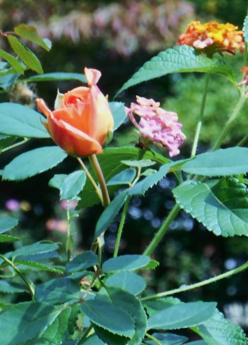 October 7, 2014 garden 024