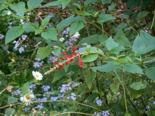 October 7, 2014 garden 037