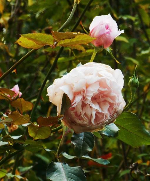 October 7, 2014 garden 041