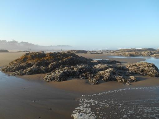 Oregon Coast, September 2014