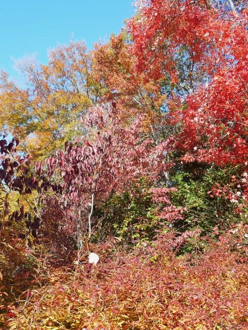 November 10, 2014 garden 020