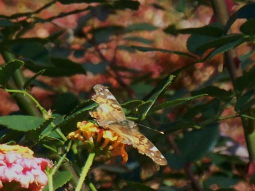 November 10, 2014 garden 043