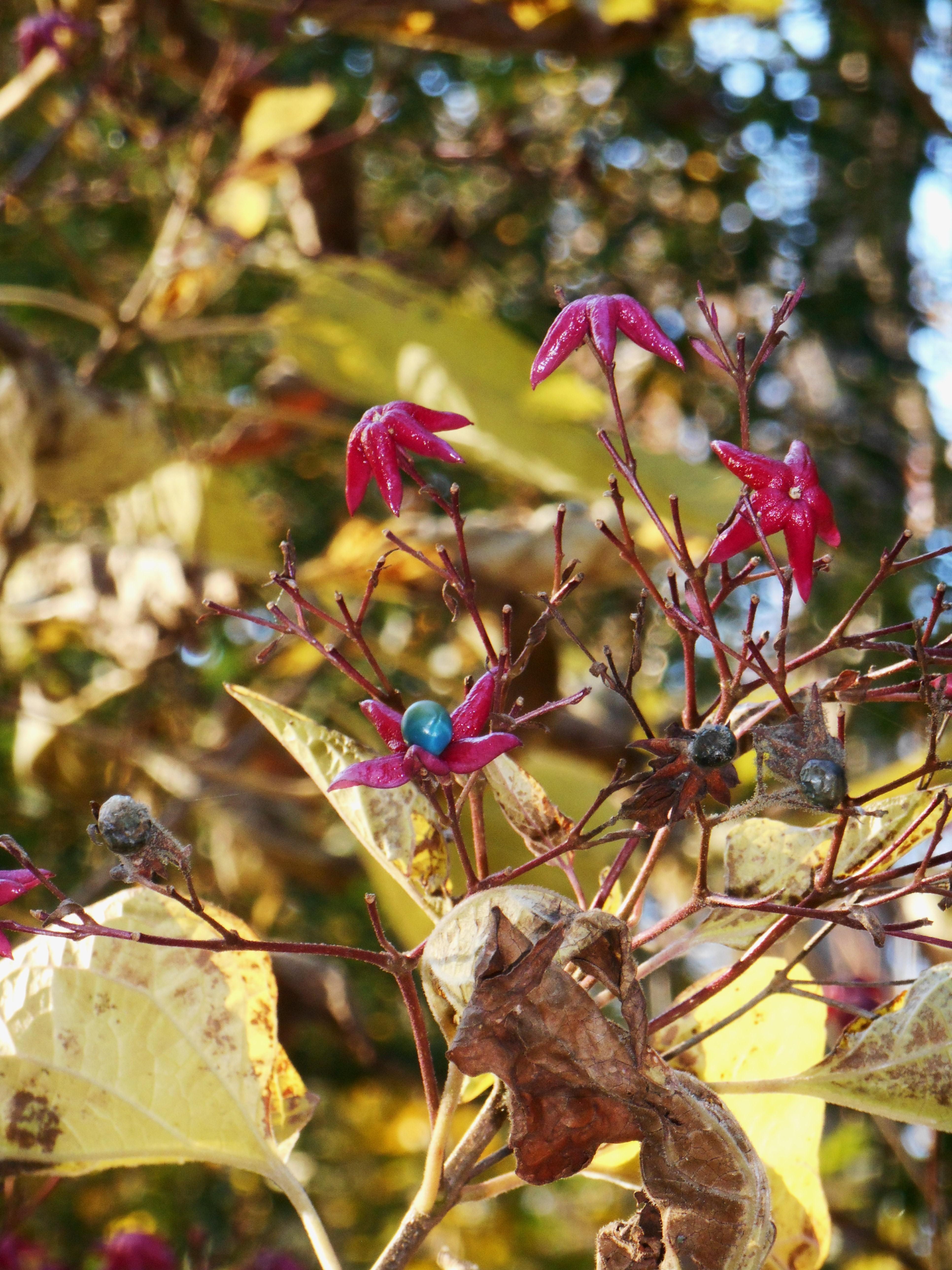 David Austin roses | Forest Garden