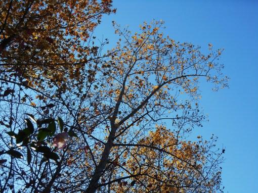 November 12, 2014 garden 022