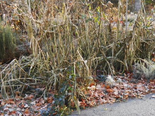 November 22, 2014 frost 002