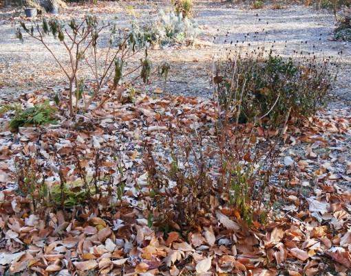 November 22, 2014 frost 006