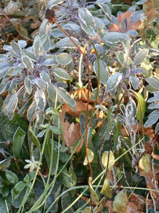 November 22, 2014 frost 009