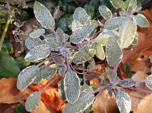November 22, 2014 frost 010