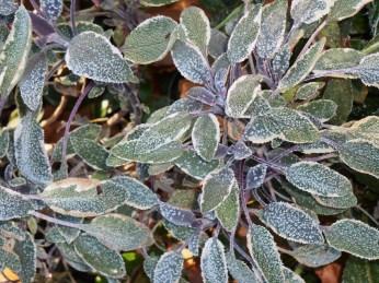 November 22, 2014 frost 011