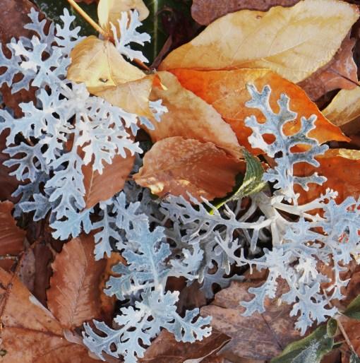 November 22, 2014 frost 017