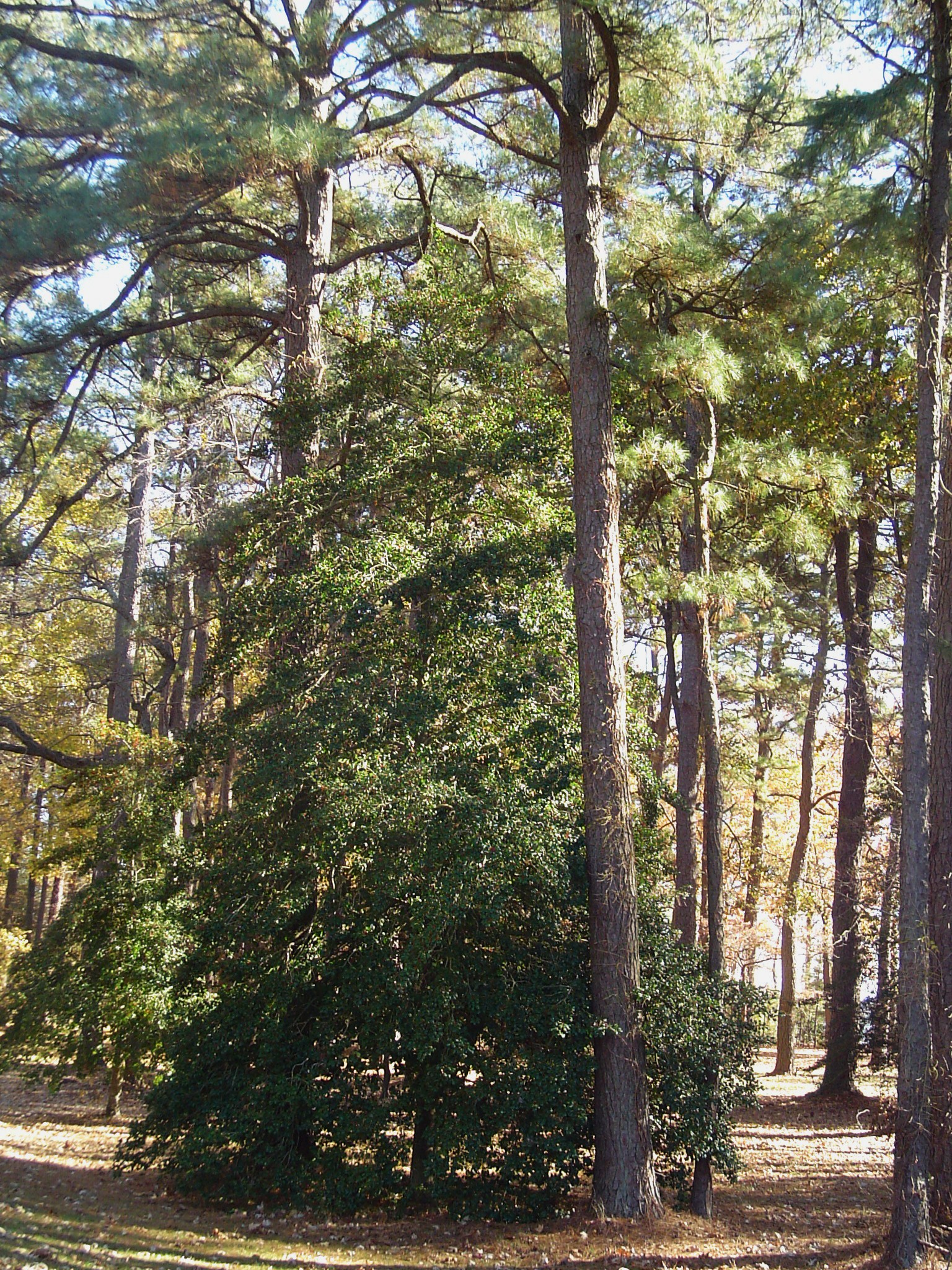 Trees Of The Oregon Garden: Forest Garden