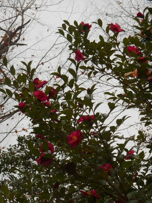 November 25, 2014 moss garden 003