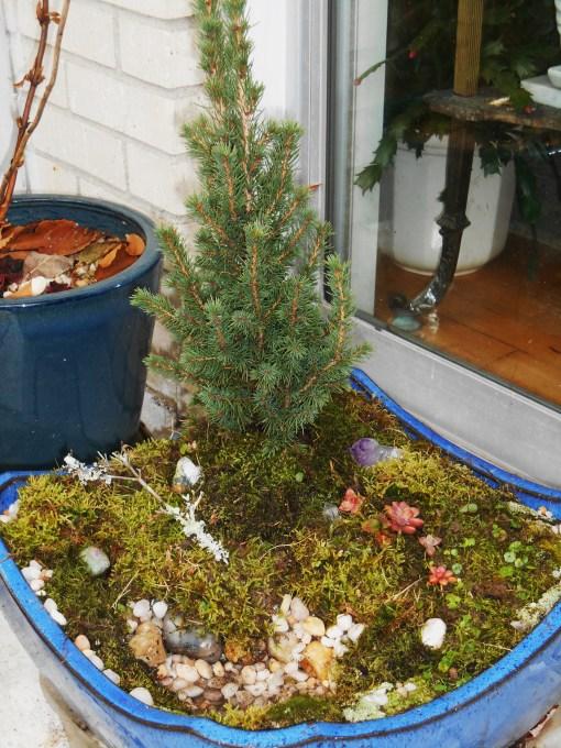 November 25, 2014 moss garden 010