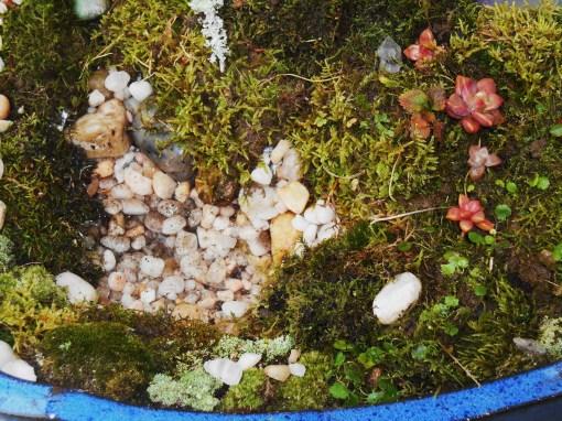 November 25, 2014 moss garden 017