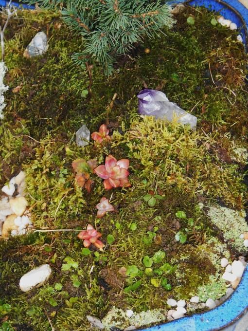 November 25, 2014 moss garden 019