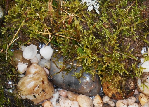November 25, 2014 moss garden 020