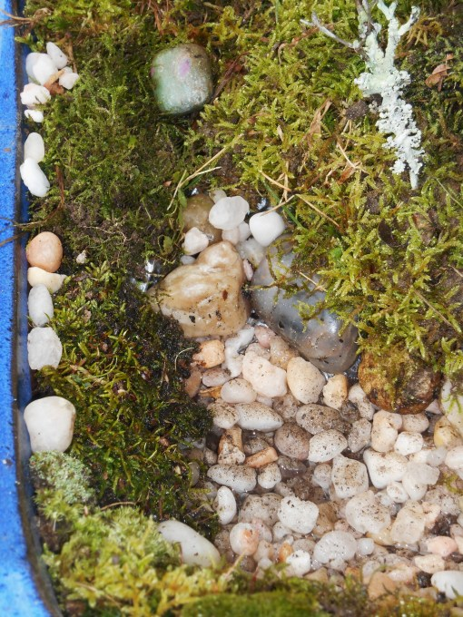 November 25, 2014 moss garden 023