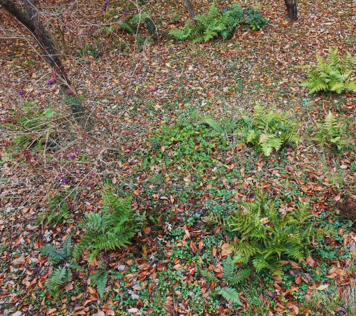 November 25, 2014 moss garden 031