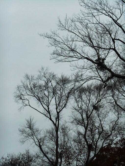 November 25, 2014 moss garden 035