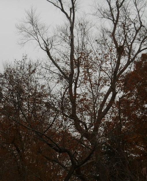 November 25, 2014 moss garden 038