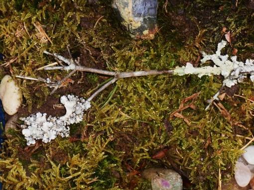 November 25, 2014 moss garden 041
