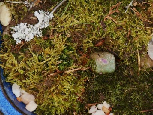 November 25, 2014 moss garden 042