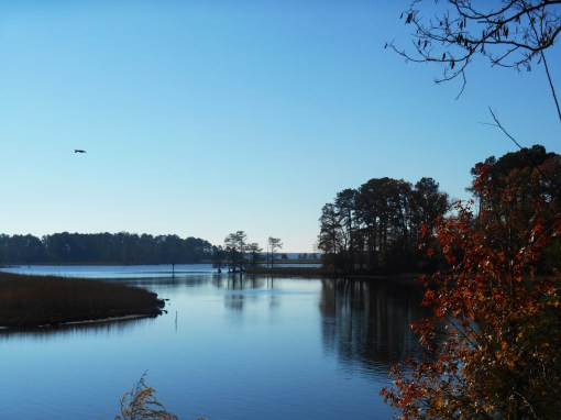 Powhatan Creek empties into Sandy Bay here.  The heron stands off to the right.