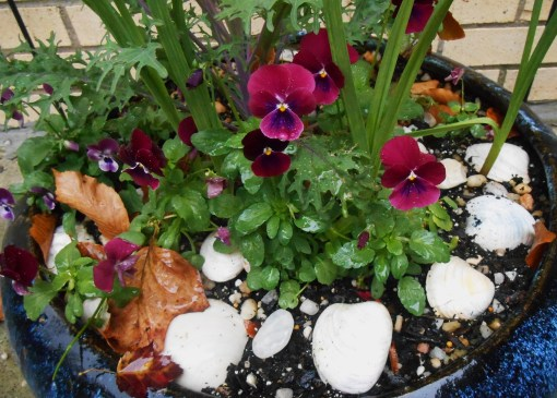 These Violas have been growing in their new pot for a few weeks.  Do you see the garlic leaves growing near them?