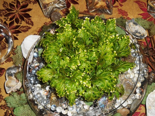 "Moss fern will thrive here in bright, indirect light.  It is in a ""semi-terrarium;"" partly, but not fully grown in glass."
