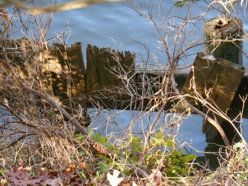 December 19, 2014 creek 005