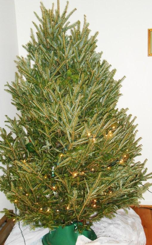 December 20, 2014 tree 001