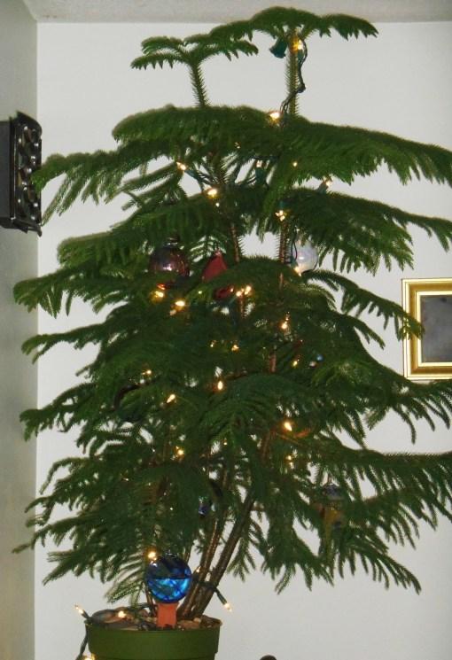 December 20, 2014 tree 002