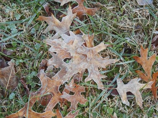 November 28, 2014 thanksgiving 063
