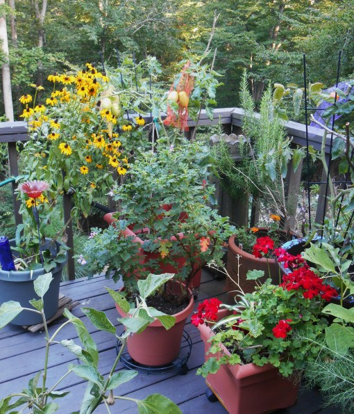 Flowers, vegetables and herbs grow together in my friends' deck garden.