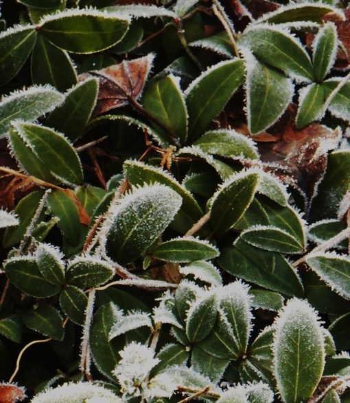 December 31, 2014 frost 018 (2)