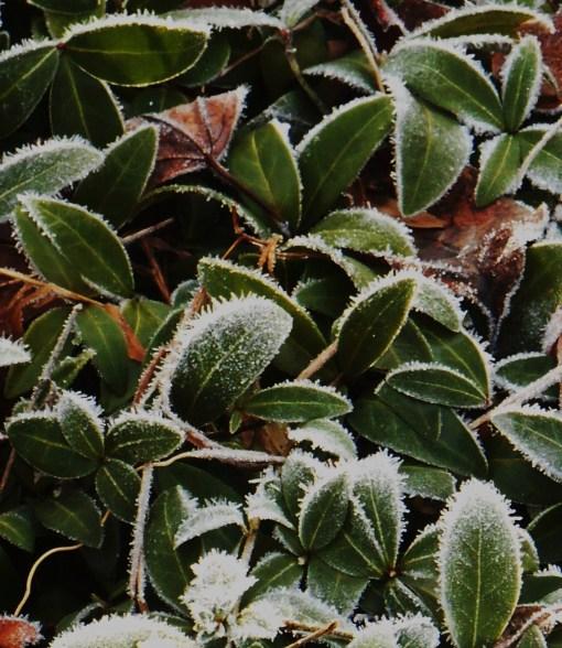 December 31, 2014 frost 018 (2)