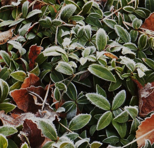 December 31, 2014 frost 018
