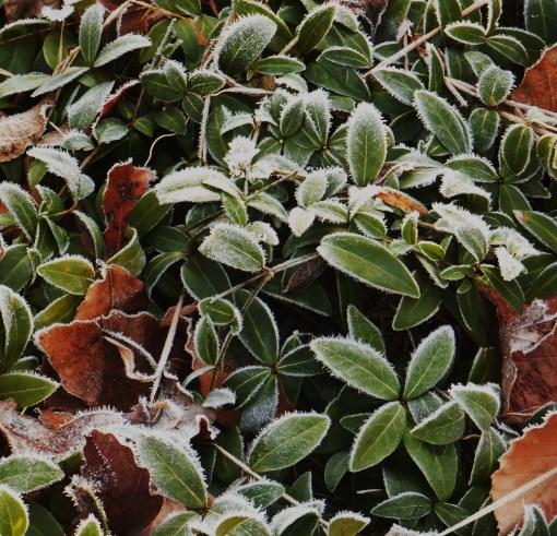 December 31, 2014 frost 018