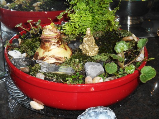January 11, 2015 terrarium 020