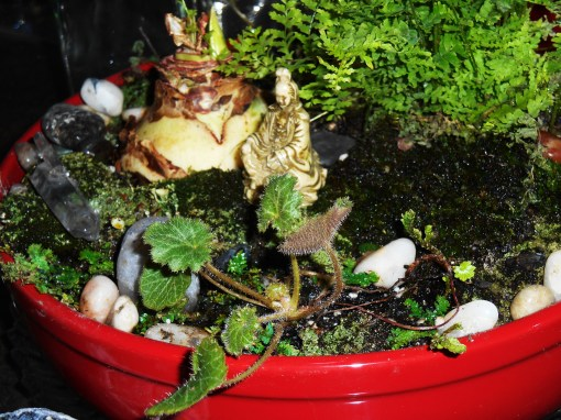January 11, 2015 terrarium 021