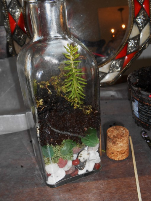 January 11, 2015 terrarium 042