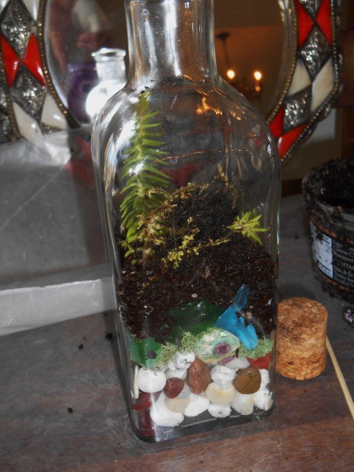 January 11, 2015 terrarium 044