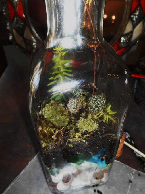 January 11, 2015 terrarium 046