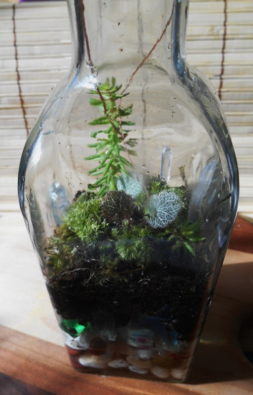 January 11, 2015 terrarium 050