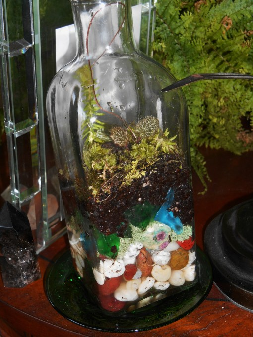 January 11, 2015 terrarium 059