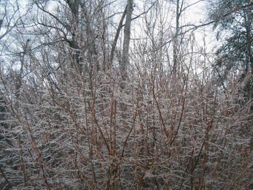 January 14, 2015 ice storm 001